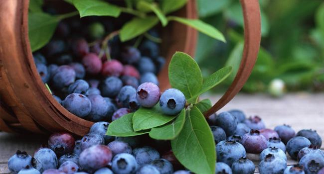 здравословни храни - боровинки